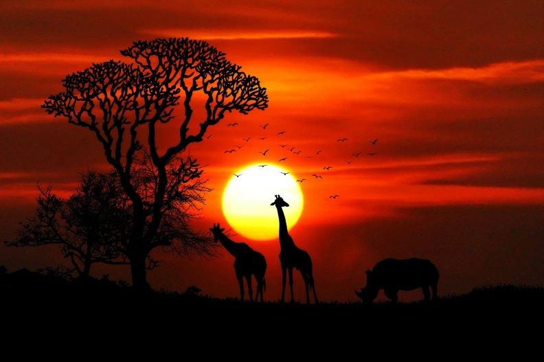 africa-animals